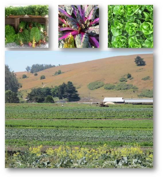 Bloomfield Farms Organics